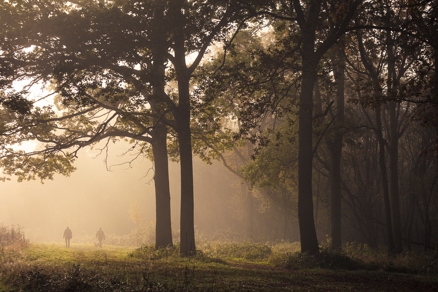 A couple walking their dog on a misty morning in Hatfield Forest