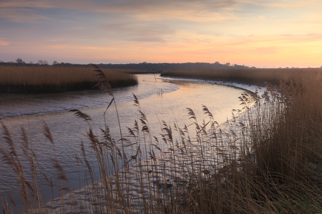 Reeds by the River Alde, Suffolk