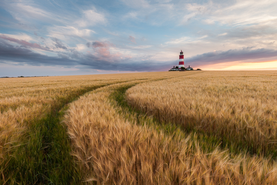 Happisburgh lighthouse , Norfolk in a field of barley at sunset
